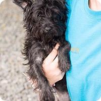 Adopt A Pet :: Jezebel - Downingtown, PA