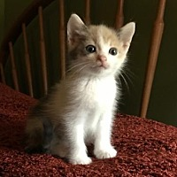 Adopt A Pet :: May - Lovingston, VA