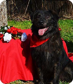 Border Collie/Shepherd (Unknown Type) Mix Dog for adoption in Burleson, Texas - Dart