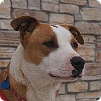 Adopt A Pet :: RJ - Newcastle, OK