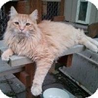 Adopt A Pet :: Milo - Anchorage, AK