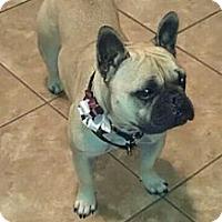 Adopt A Pet :: Zoey - Whittier, CA