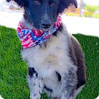 Adopt A Pet :: Frankie cute fluffy boy - Sacramento, CA