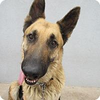 Adopt A Pet :: Dieter Von Altenberg - Phoenix, AZ