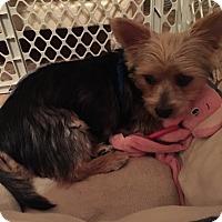 Adopt A Pet :: Scotty - Leesburg, FL