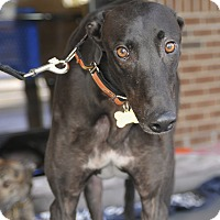Adopt A Pet :: Matt - Lexington, SC