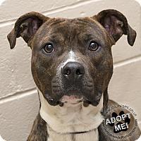 Adopt A Pet :: Wrigley - Troy, OH