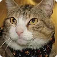 Adopt A Pet :: GALILEO - Clayton, NJ