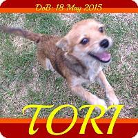 Adopt A Pet :: TORI - Manchester, NH