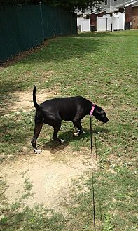 Labrador Retriever Mix Dog for adoption in Lithonia, Georgia - Lady