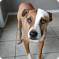 Adopt A Pet :: Max/ A.K.A.Rascal - West Hartford, CT
