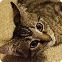 Adopt A Pet :: Levi - Jeannette, PA