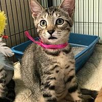 Adopt A Pet :: Moxie - Orlando, FL