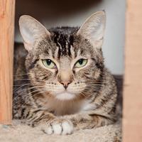 Adopt A Pet :: Ginny - Mission Hills, CA