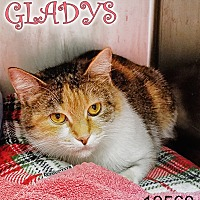Adopt A Pet :: Gladys - Oak Ridge, TN