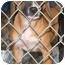 Photo 2 - Boston Terrier Mix Puppy for adoption in Inman, South Carolina - Alphie