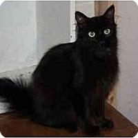 Adopt A Pet :: Ella Fitzgerald - Owasso, OK