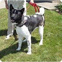 Adopt A Pet :: Yuukan - Hayward, CA