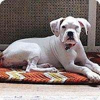 Adopt A Pet :: Rita - North Haven, CT