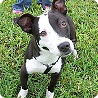 Adopt A Pet :: Friday - Hagerstown, MD