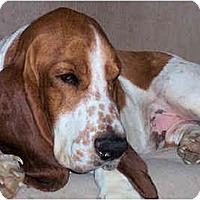 Adopt A Pet :: Jamison - Phoenix, AZ