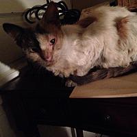 Adopt A Pet :: Piper - East McKeesport, PA