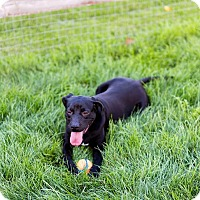 Adopt A Pet :: Buffalo Bill - Toledo, OH