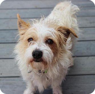 Terrier (Unknown Type, Medium) Dog for adoption in Atlanta, Georgia - Wilmur