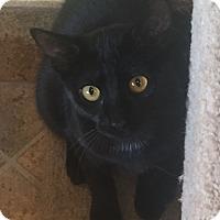 Adopt A Pet :: Lila - Encinitas, CA