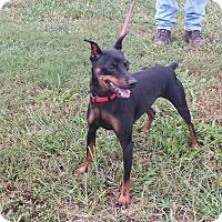 Adopt A Pet :: FLASH - Wilmington, NC