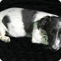 Adopt A Pet :: Panda - Lufkin, TX