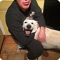 Adopt A Pet :: Casper - Adopted! - Croydon, NH