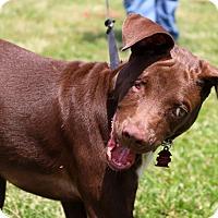 Adopt A Pet :: Dozer ~ meet me! - Glastonbury, CT