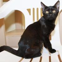 Adopt A Pet :: Fletcher - Greensboro, GA