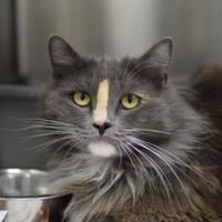 Adopt A Pet :: Luna - Santa Barbara, CA