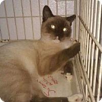 Adopt A Pet :: Macchiato - Fort Lauderdale, FL