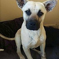 Adopt A Pet :: Zurik - Apache Junction, AZ
