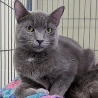 Adopt A Pet :: Satchel - Stroudsburg, PA