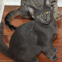 Adopt A Pet :: Tom Collins - Berlin, MD