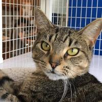 Adopt A Pet :: Eloise - Parma, OH