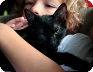 Domestic Shorthair Kitten for adoption in Raritan, New Jersey - Tootsie