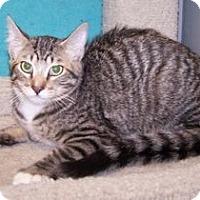 Adopt A Pet :: K-Emery7-Matthew - Colorado Springs, CO