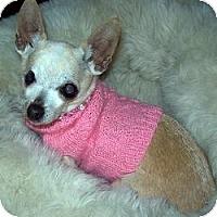Adopt A Pet :: Lovette - Dartmouth, MA