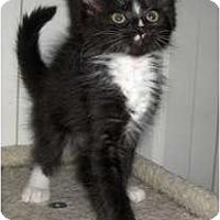 Adopt A Pet :: Flora - Richmond, VA