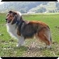 Adopt A Pet :: Sidney - Alderson, WV
