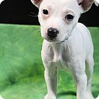 Adopt A Pet :: Harper - Wytheville, VA
