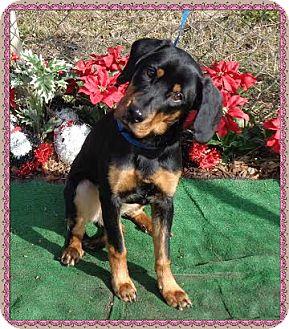 Rottweiler Mix Dog for adoption in Marietta, Georgia - RAMONA