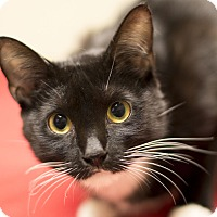 Adopt A Pet :: Dahlia - Chicago, IL