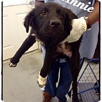 Adopt A Pet :: Annie - Tampa, FL