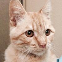 Adopt A Pet :: Noelle - Chandler, AZ